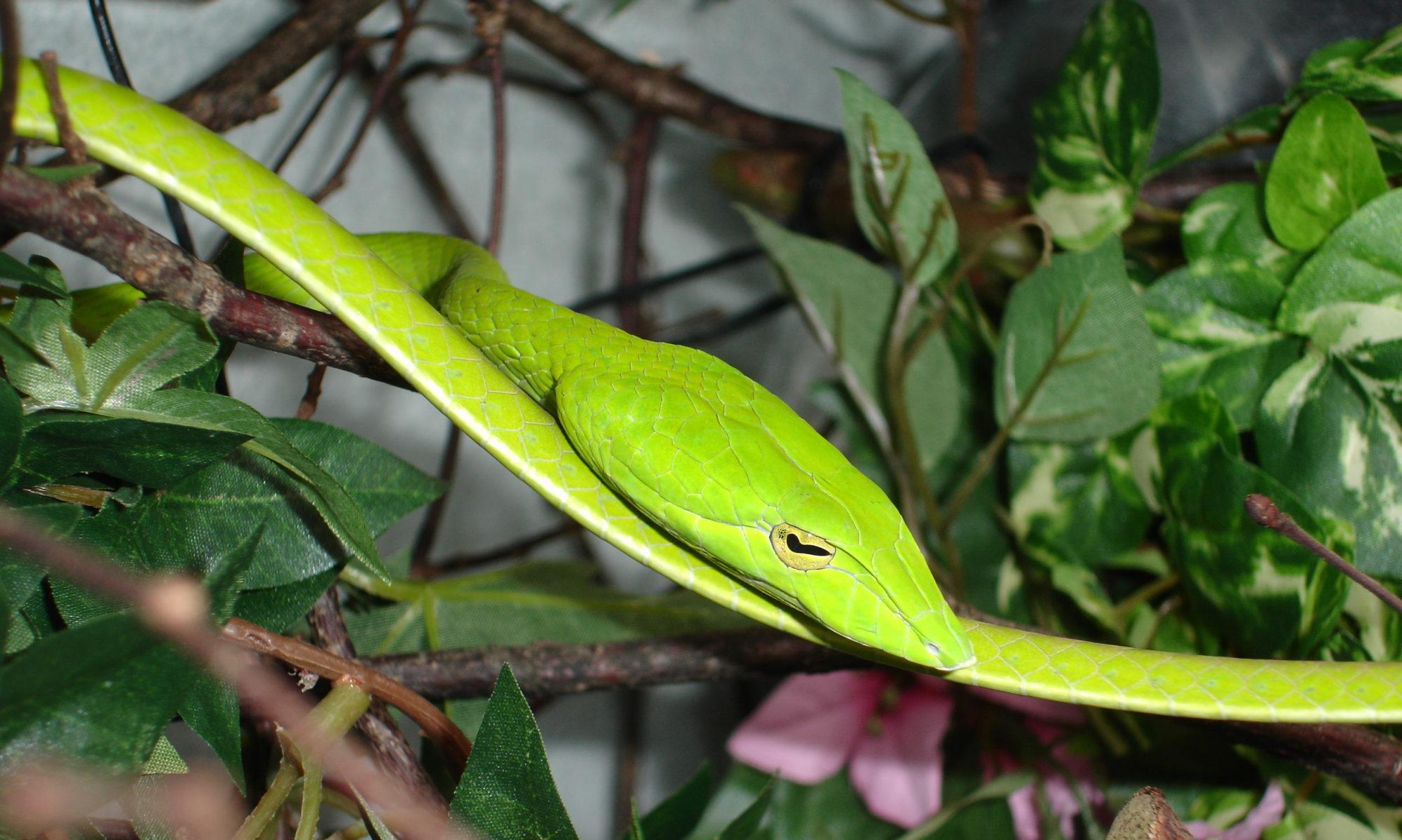 c-ro reptiles